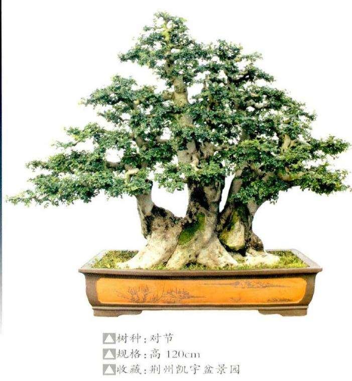 2020年如皋市举办第11届花木盆景艺术节