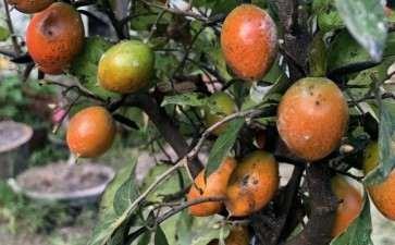 老鸦柿下山桩果子上好多白色的是啥