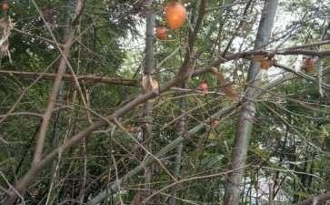 宁波余姚山上是老鸦柿下山桩吗 图片