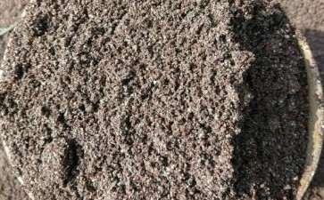 养老鸦柿下山桩的好土 火山岩风化土