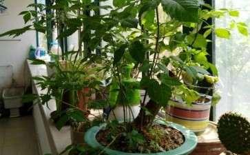我家的盆栽荆条下山桩开花了 图片