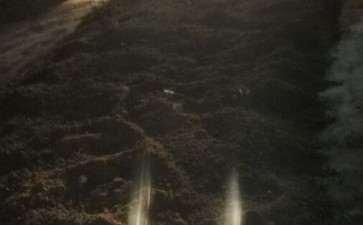压煤渣 用来种植金弹子下山桩 图片