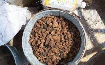 用蜂窝煤渣养金豆下山桩 可以吗