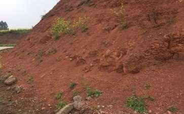 为什么风化石栽金弹子下山桩 很好