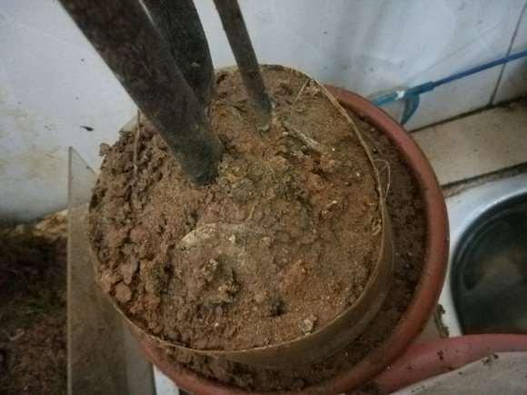 金弹子下山桩没有沙子 只用泥巴 可以吗