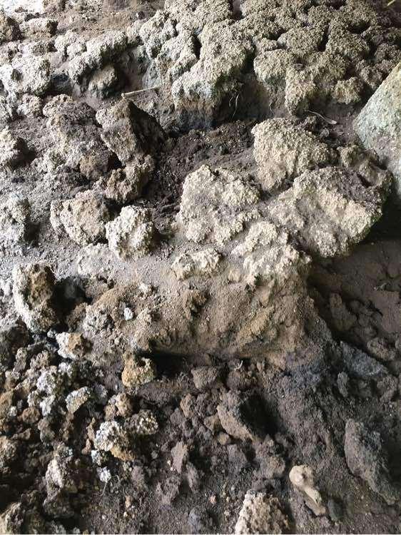 风化石可以种金弹子下山桩吗