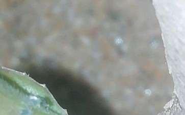 吊茄子下山桩发芽里有虫子 怎么办