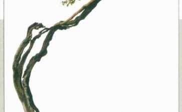 图解 韩学年怎么博兰盆景的方法