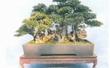 2020年 陶洁之获安徽省盆景终身成就奖