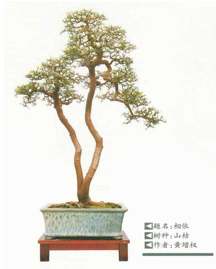 树桩盆景在精神需求的规律有哪些