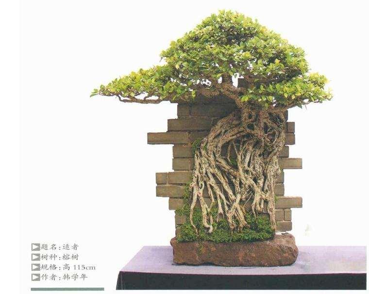 树桩盆景在视觉心理的规律有哪些
