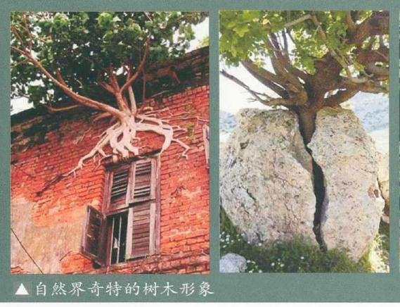 树桩盆景视觉心理转码选择的3个原则
