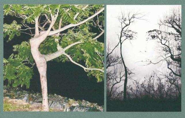 树桩盆景怎么凸显个性规律的方法
