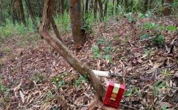4CM的山格木下山桩 可以吗 图片