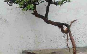 这是铁马鞭下山桩吗 怎么区别 图片