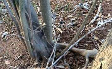 马鞍山市境内有老鸦柿下山桩吗