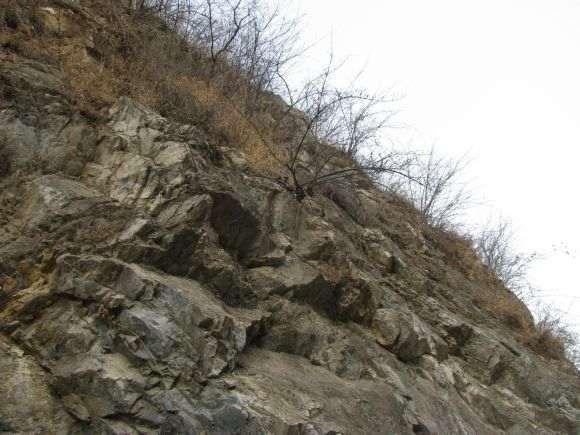 悬崖上的连翘下山桩