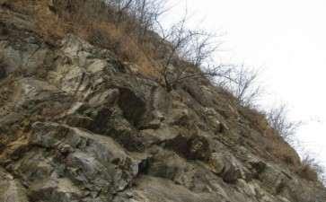 悬崖上的连翘下山桩 可以吗 图片