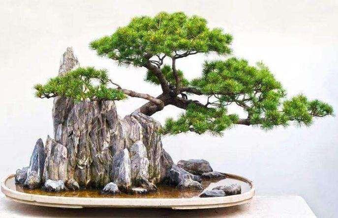 怎么制作附石式盆景的4个方法
