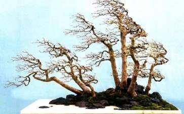 谈树石盆景的风格 兼赏张志刚新作