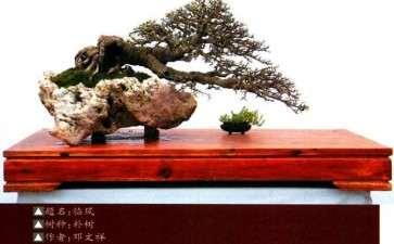 川派盆景的历史渊源有哪些 图片