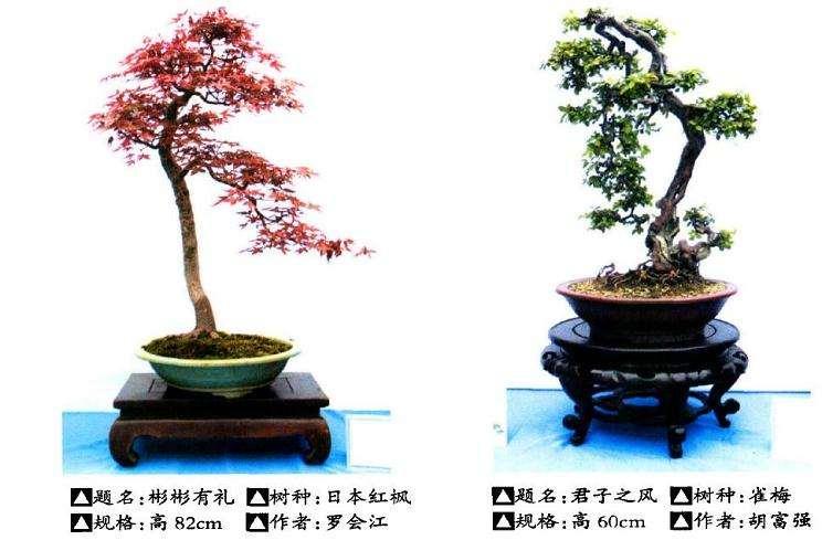 2016年 武汉举办盆景艺术进校园展览
