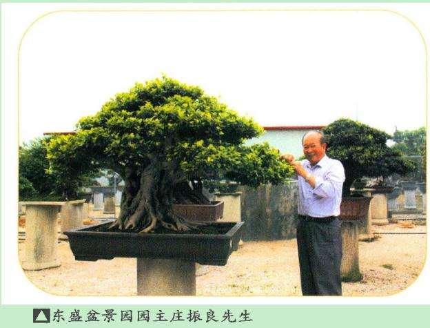 福建漳州东盛盆景园 1998年投资