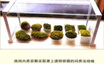 苔藓植物是植物界最简单 最原始的类群