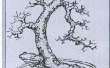 图解 树桩盆景怎么布石的方法