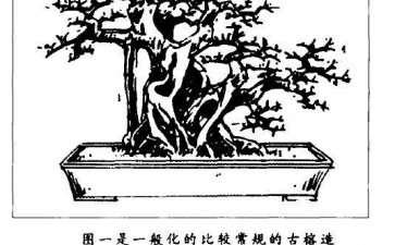 图解 大型古榕树盆景怎么造型的方法