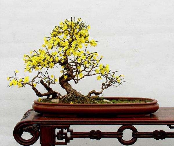 春季迎春盆景怎么生长整型的3个方法