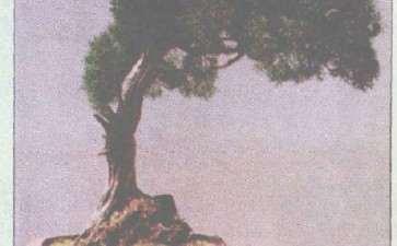 对胡乐国大师的盆景《孤岗风烈》3个看法