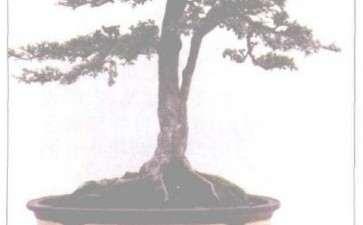 霞浦盆景怎么整形的3个方法