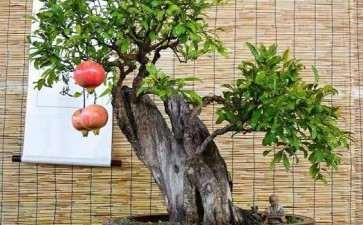 果树盆景怎么授粉的3个方法