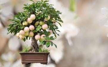 果树盆景怎么控冠整形的3个方法