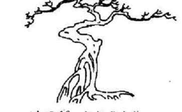 图解 树木盆景造型怎么走势分解