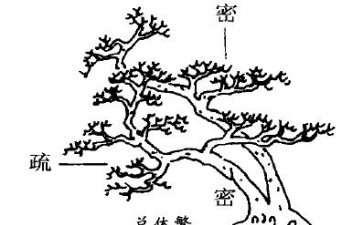 图解 树木盆景造型怎么繁简并用