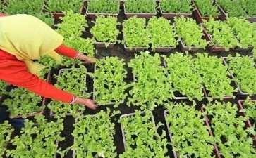 蔬菜盆栽观赏期怎么养护的6个方法