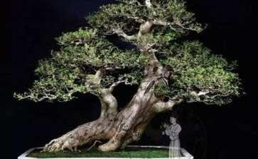 树木盆景怎么整形修剪的4个方法