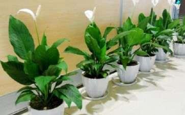 特别耐旱的室内盆栽植物 不浇水也可以