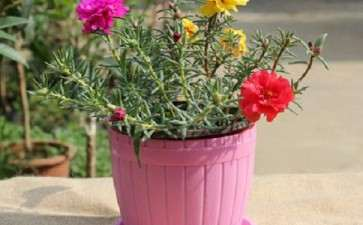阳台盆栽花卉怎么治理的3个方法