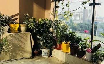 庭院盆栽花木怎么换盆修剪的3个方法