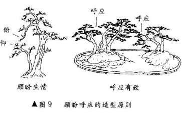 图解 树木盆景造型怎么顾盼呼应