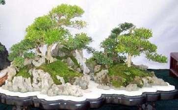 水旱盆景怎么铺种苔藓的3个方法
