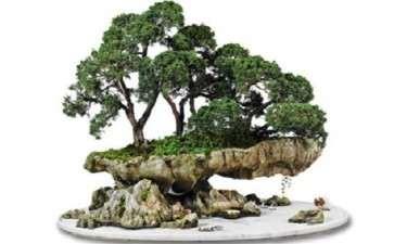 水旱盆景怎么栽种树木的方法
