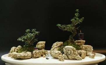 水旱盆景怎么胶合石头的方法