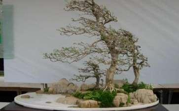 水旱盆景树木怎么布局的6个方法
