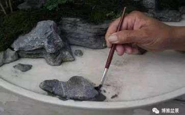 水旱盆景石头怎么布局的方法