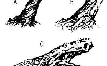 图解 怎么制作露根式盆景的2个类型
