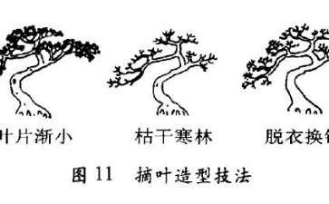 图解 盆景怎么摘心摘叶的3个方法